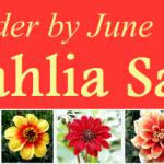 dahlia-order-by