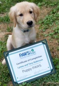 paws-puppy-tory